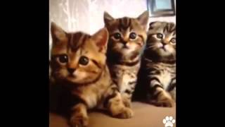 Best Pet Vines of 2013   Amazing Collection of This Years Dog Cat and Animal Vines 60 MINUTES