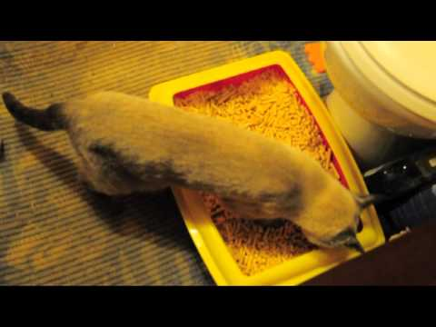 Вопрос: Как приучить к туалету взрослую кошку,жившую до этого на улице?