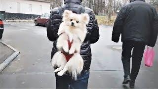 Смешные собаки Приколы про собак Funny Dogs 2019 (Самые Классные хохмы)
