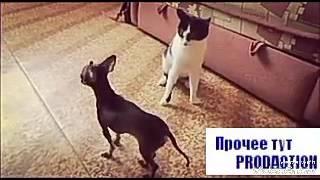 Самая ЭПИЧНАЯ битва собаки и большого кота)размер не имеет значения