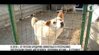 В Тирасполе появится питомник для бездомных животных