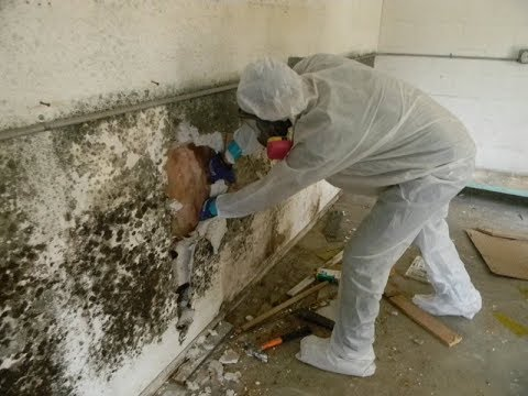 How To Get Rid Of Mold Black Removal Remediation In House