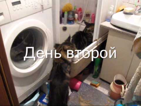 Знакомства Кострома, дарина, 26 лет - Знакомства на