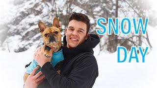 Dog Had a Snow Day