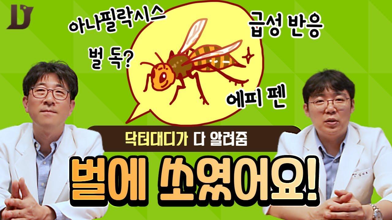 호박벌,말벌,꿀벌 엥? 벌들이네 벌에 쏘였어요 어떻게하죠!!