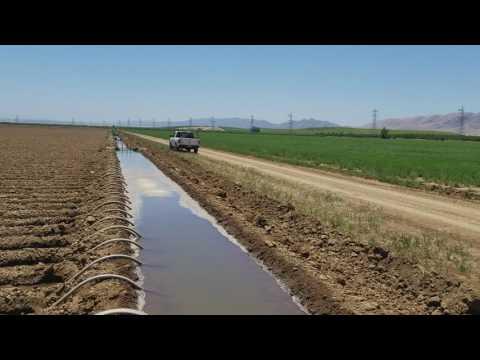 Trabajo de campo Riego por agua rodada California Estados Unidos