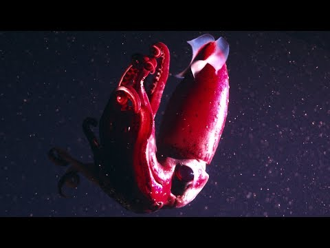 Revealing the Secrets of the Deep Ocean | Our Blue Planet | Earth Unplugged