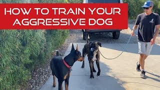 Learn how to touch, correct and reinforce your aggressive dog
