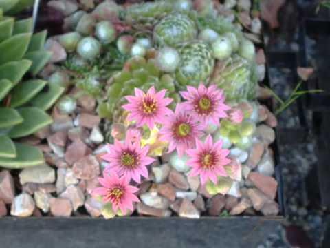 Vivero jardinelandia jardines flores youtube for Plantas de vivero