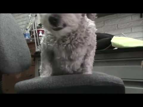 Curly Vs Mimi