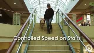 Fetching Freedom - Ptsd Service Dog In Training - Stairs