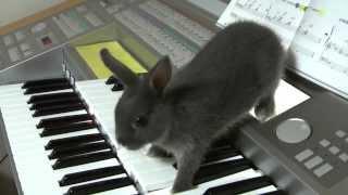 子ウサギによる無調主義音楽♪