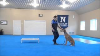 Cooper (greyhound) Boot Camp Training Video