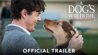 A DOG& 39 S WAY HOME Official Trailer HD