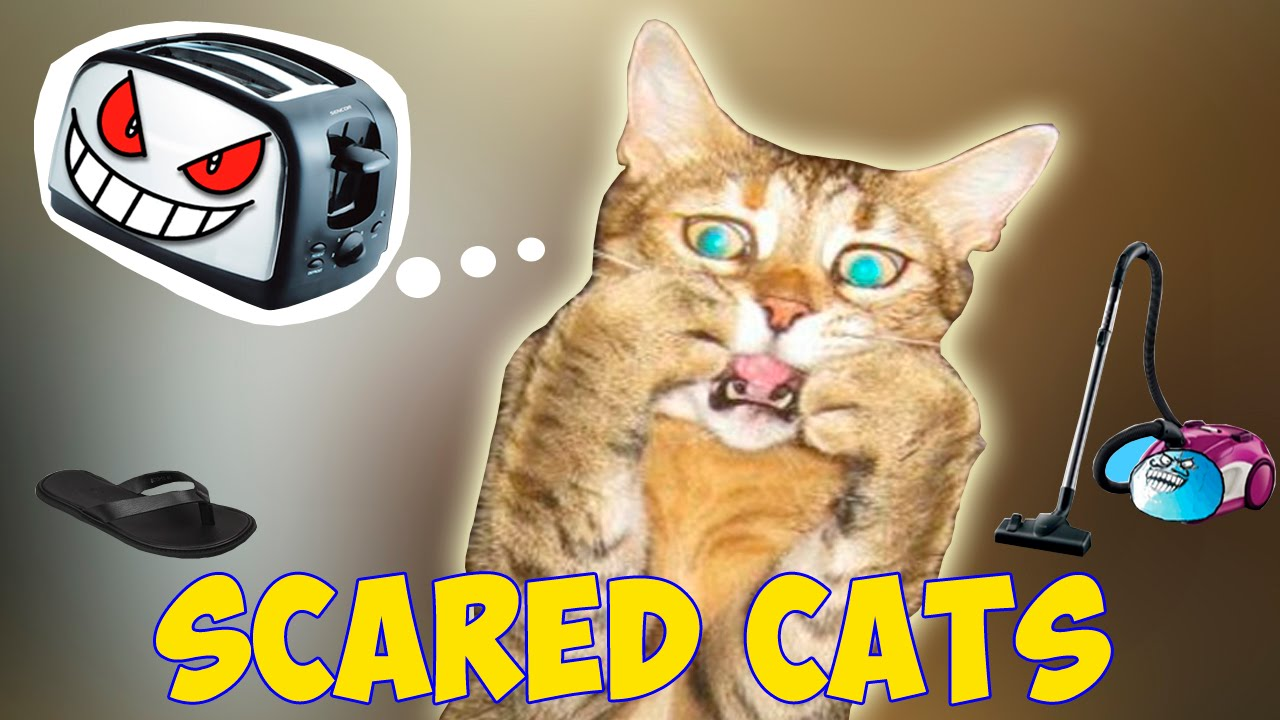 Cats Scared Of Random Things - Scared Cats Compilation - Funny Cats 2016