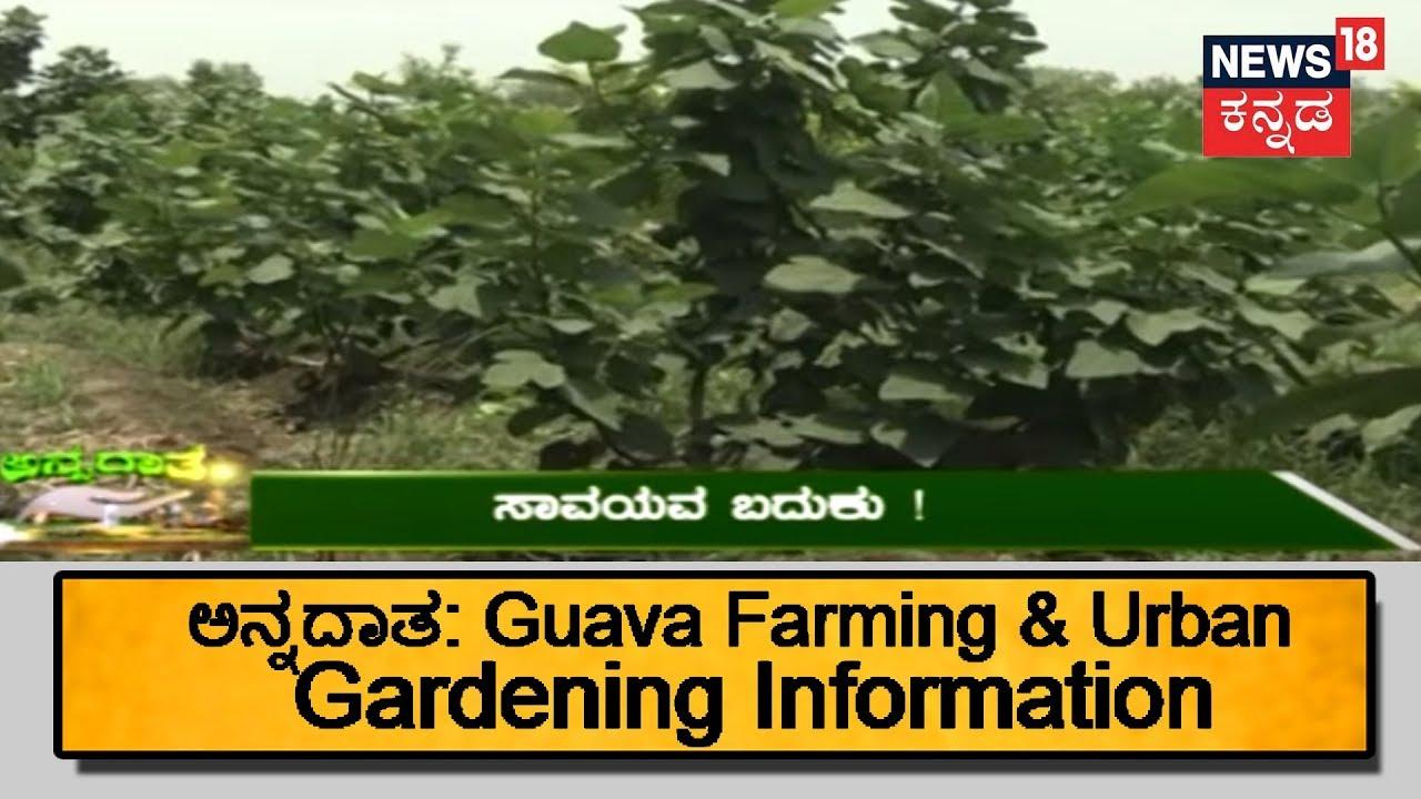 ಅನ್ನದಾತ | Guava Cultivation & Urban Farming Across Karnataka | June 28, 2018