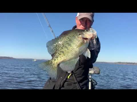 Lake O The Pines Crappie With BoneHead Tackle