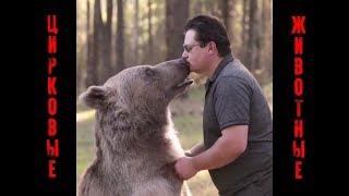 Жизнь животных в Цирке