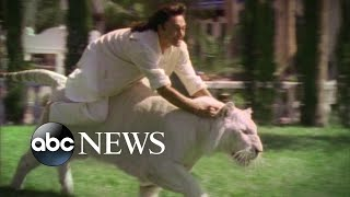 """'siegfried and roy's' roy horn talks living, training with tigers, lions: part 3""""i'm sort of their father figure,"""" said. """"i guide them through their..."""