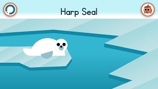 How To Draw A Harp Seal | Artie