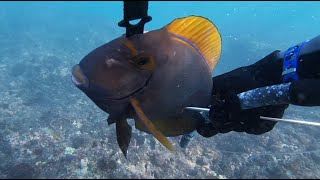 Подводная охота на Бали Spearfishing in Bali
