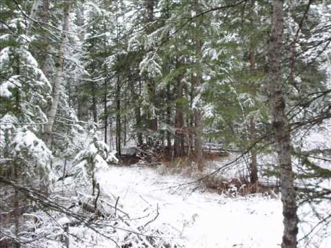 ASMR Snowfall Sounds in  Fish Creek Provincial Park