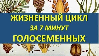 ЖИЗНЕННЫЙ ЦИКЛ ГОЛОСЕМЕННЫХ ЗА 7 МИНУТ (+ разбор заданий из ЕГЭ)