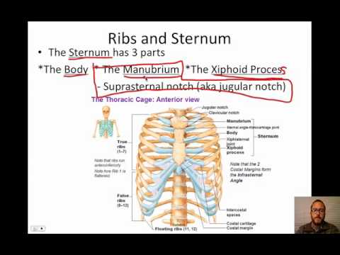Vertebral Column Video
