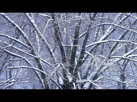 Картинки с кружащимися снежинками