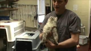 Feline Herpes Virus, Type I