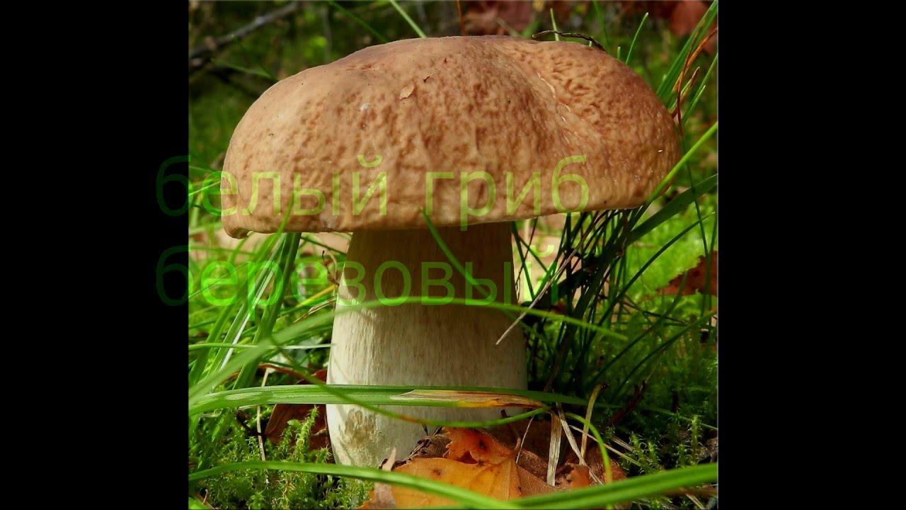 Домашний бизнес Медведева Выращивание грибов дома. - YouTube