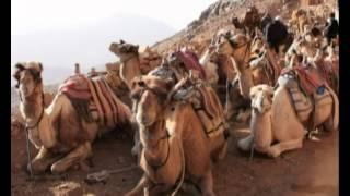 Природоведение 67. Верблюды — Шишкина школа