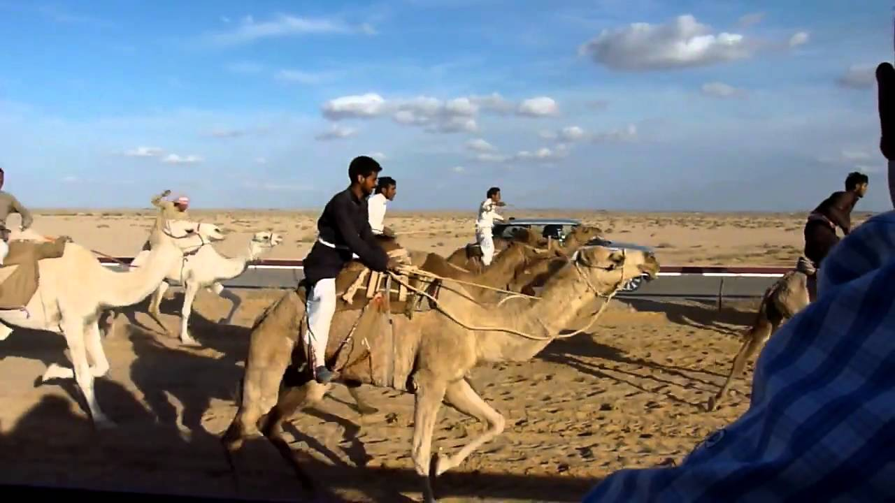Image result for camel racing syria