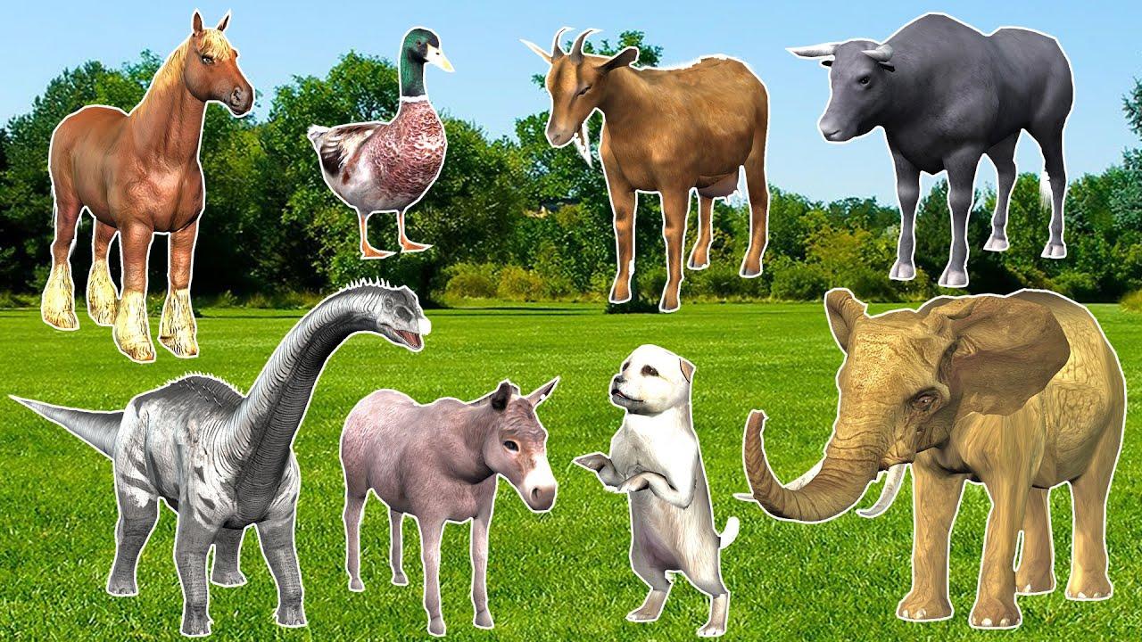 Learn Wild Animals Names & Sounds   Pet Animals Names Dog Elephant Dinosaur