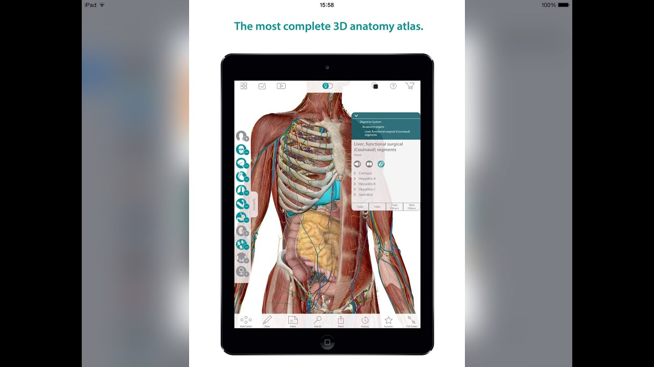 Human Anatomy Atlas 3d Anatomical Model Of The Human Body Youtube