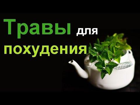 Лучшие травы для похудения сжигающие жир…