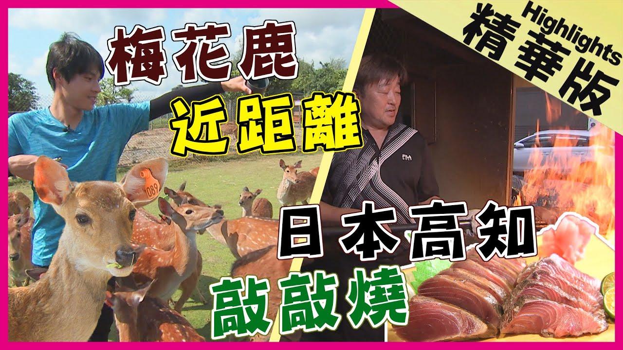 【精華】小奈良公園 / 稻燻鰹魚敲敲燒 / 日式百年溫泉 |《世界第一等》精華版