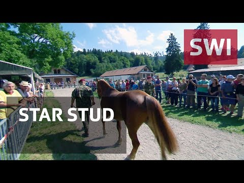 Mistreated horses sold off at auction
