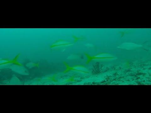 GoPro 90' Underwater Video Of Fish Habitat