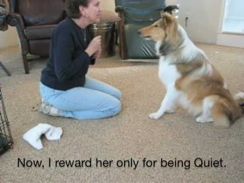 How to Teach Dog Tricks, Speak and Quiet