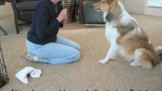 How To Teach Dog Tricks, Speak And Quiet