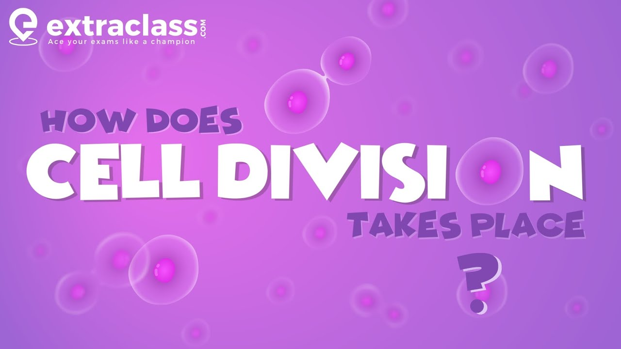 How does Cell division Takes place | Biology | Extraclass.com