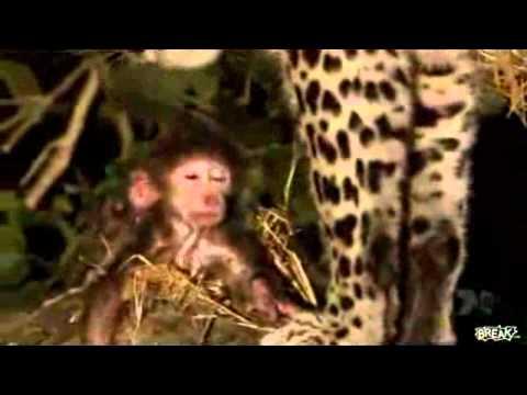 giết khỉ mẹ nhưng cứu khỉ con
