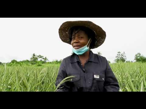AgroLink - Exploring Ghana's Pineapple Industry