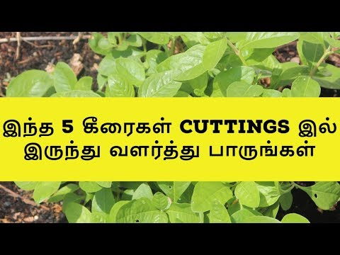 grow-this-5-leafy-vegetable-from-cuttings-|-easy-growing-leafy-vegetables-|