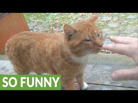 Feral cat loves to 'chat' with humans