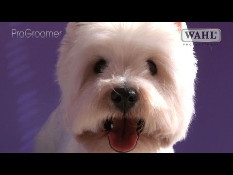 Grooming Guide - West Highland White Terrier Pet Trim - Pro Groomer