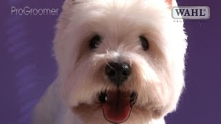 Grooming Guide  West Highland White Terrier Pet Trim  Pro Groomer
