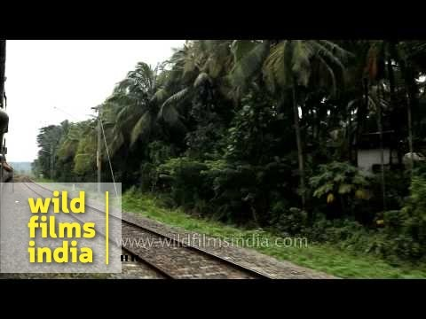 Train journey from Tirur to Pallipuram