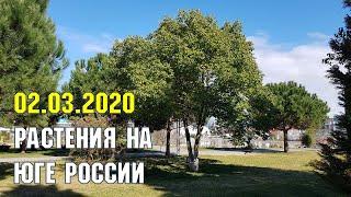 ЮЖНАЯ ПРИРОДА 2 марта 2020 года | Субтропический рай в отдельно взятом городе